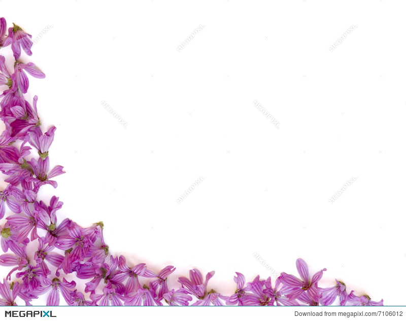 Purple Flowers Background Stock Photo 7106012 Megapixl