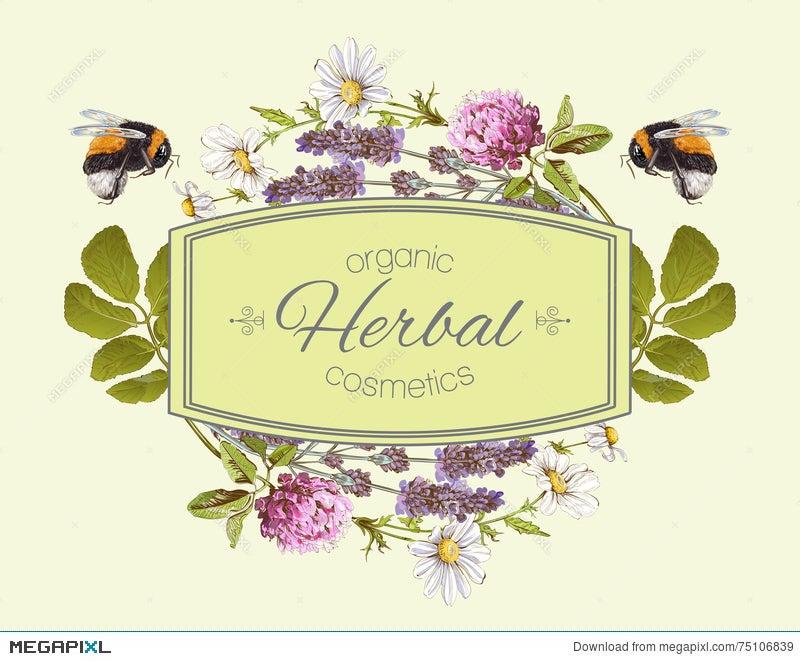 Vector Herbal Banner Illustration 75106839 Megapixl