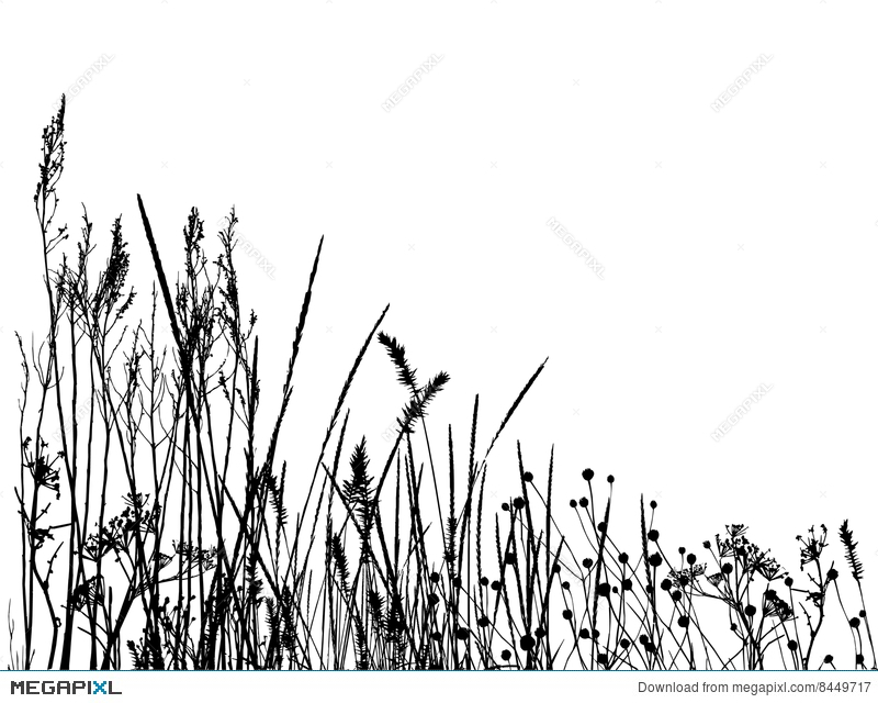 tall grass silhouette. Real Grass Silhouette / Vector Tall Megapixl